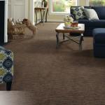Twist Tuftex Carpet – Great Designer Style Carpet for Your Home